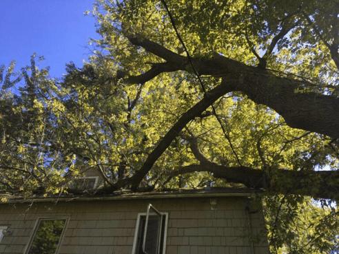 Fallen tree on a roof